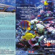 Full Color Print Brochure